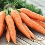 Морковь, посадка и уход