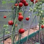 Подкармливаем растения… воздухом